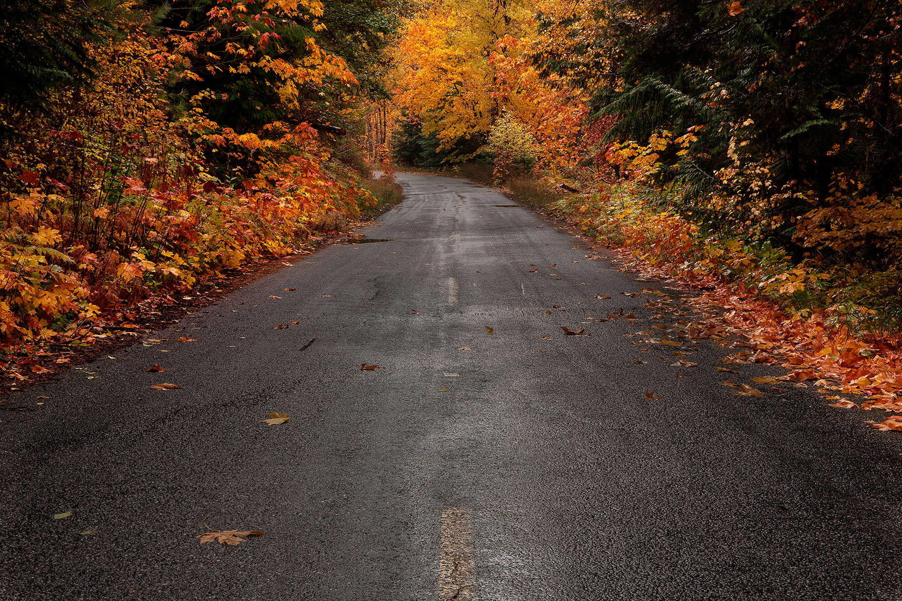 Fall-Color-Road